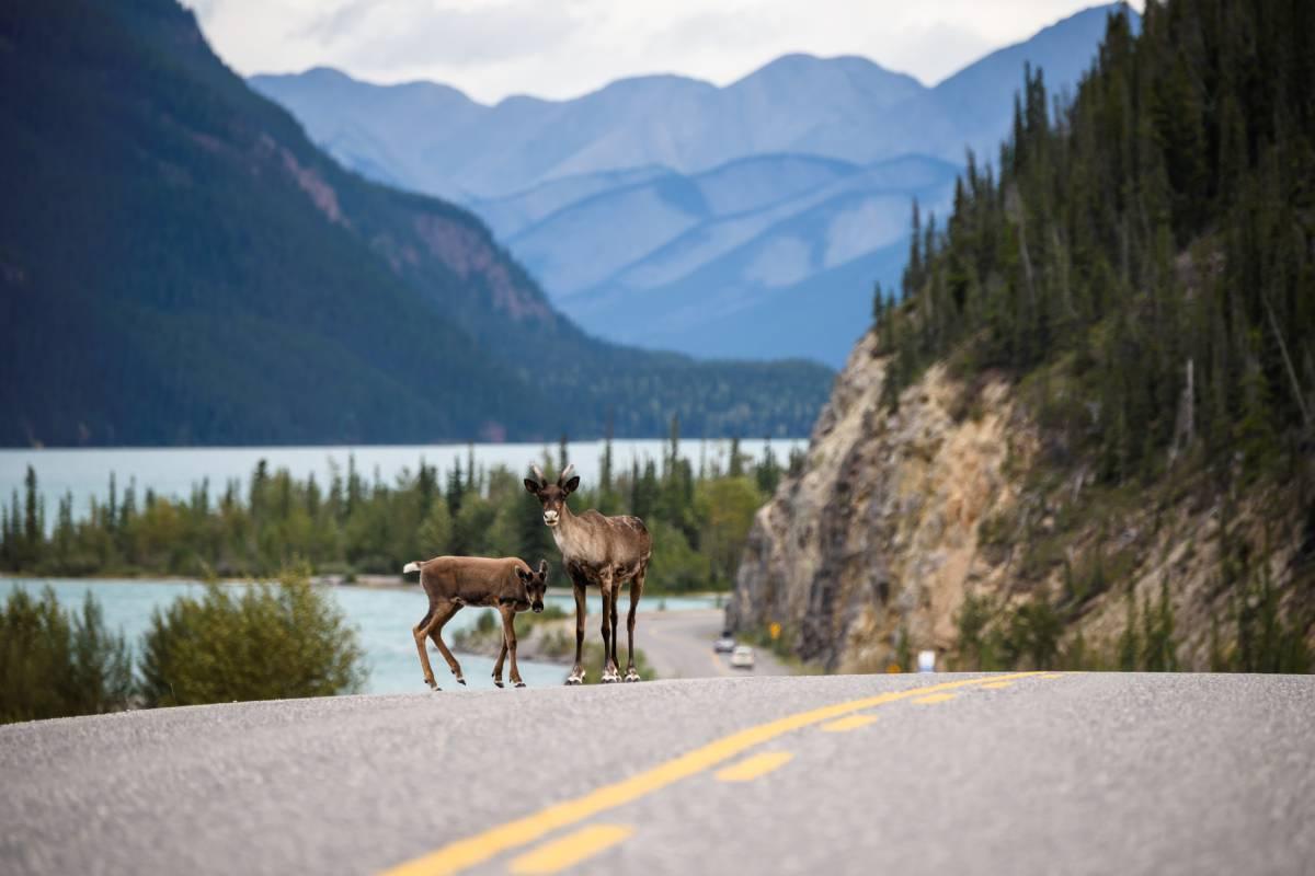 KUBO Alaska Highway